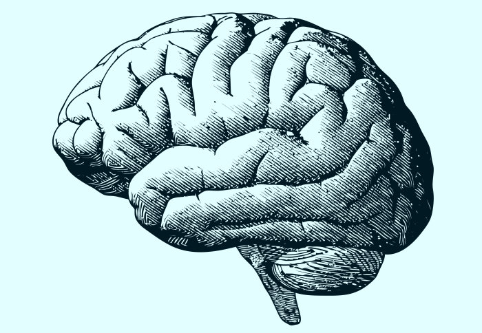 The Brain in Recovery: THE NEUROSCIENCE OF ADDICTION RECOVERY